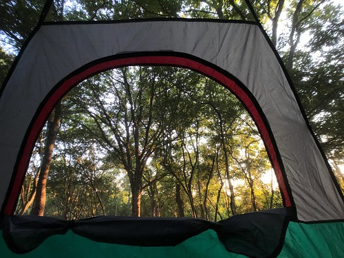 cc0 nature trees sunrise window camping tent