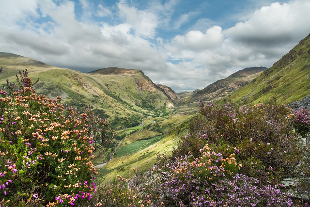Floral View Of Llanberis Pass ... Wales
