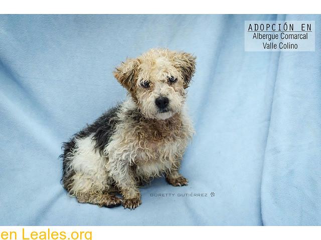 Perros Para Adoptar Santa Cruz De Tenerife Tenerife Flickr