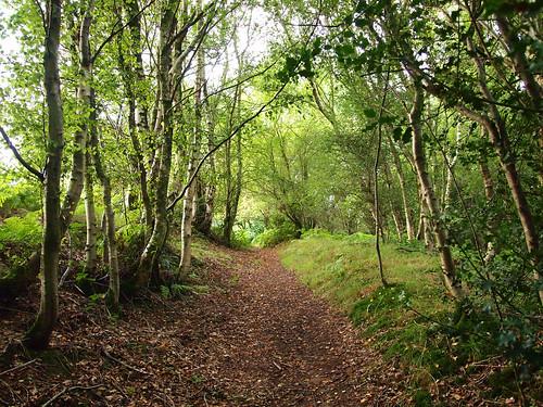 birch path betula pendula tree trees forest ekaterina england alexander sussex summer landscape