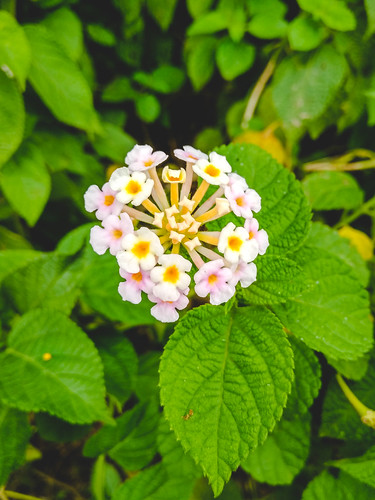 goddimari rangpurdivision bangladesh bd tajhat palace flower colors vivid contrast