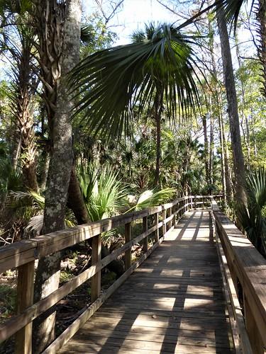 ocalafl silverspringsstatepark swam boardwalk wood landscape