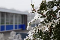 winter-2017-4