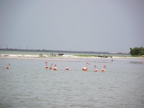 Rio Lagartos, Yucatán