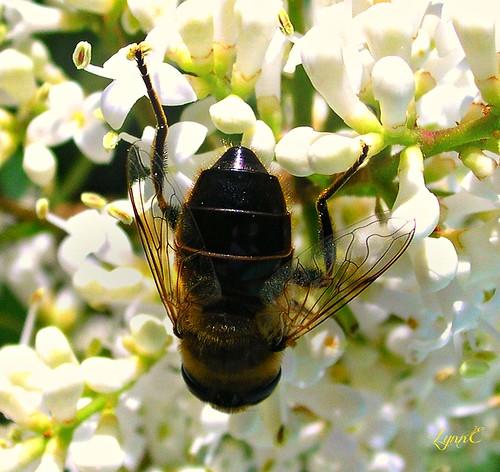 bee garden flowers