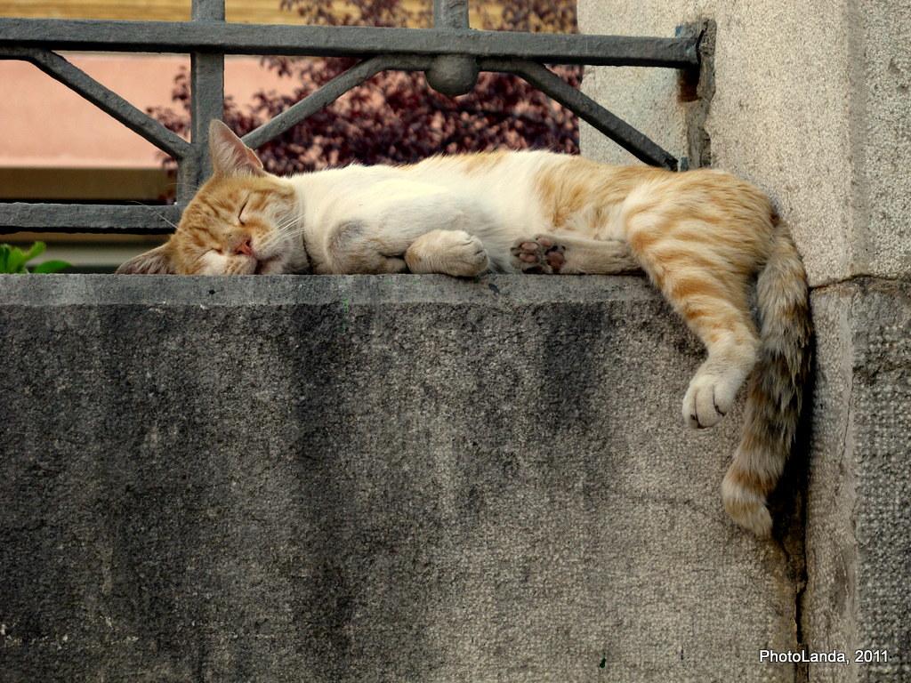El Gato del Cementerio