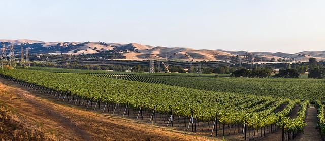 over olivina vineyards