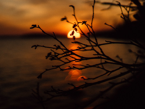 vsco vscofilm robbhohmann maine bluehill brooklin voigtlander bokeh sun orange tree pine 3512 nokton 35mm a7 nature landscape