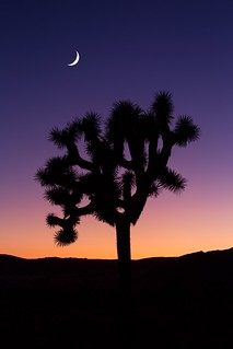 Joshua Tree Gradient | by RyanLunaPhotography