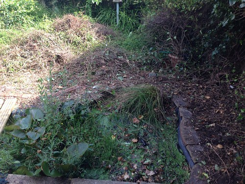 Pond clearance Titchfield