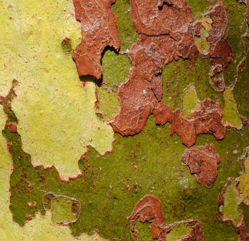 Multi Colored Tree Bark Jardin Des Plantes Paris Flickr