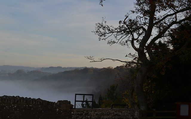 The Forest from Symonds Yat