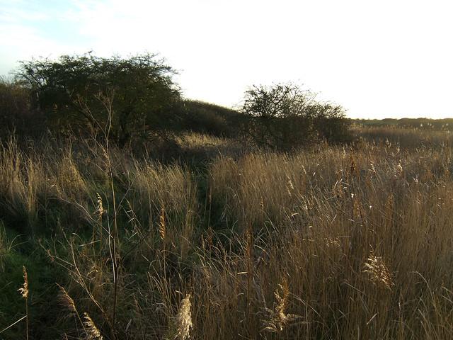 Footpath over Vange Marshes