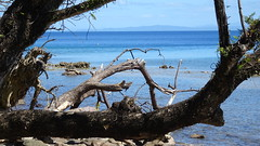 227 bei Sturm versunkenes Land,  -  coastal strip lost in storm; Daku Rd. Savusavu