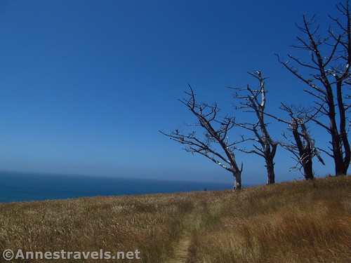 Trees in Point Arena-Stornetta National Monument, California