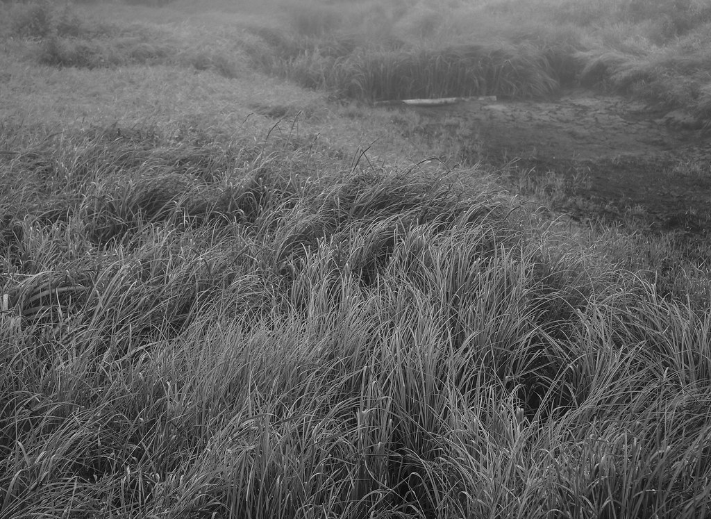 Foggy Day at Creamers Field Shared BW-2