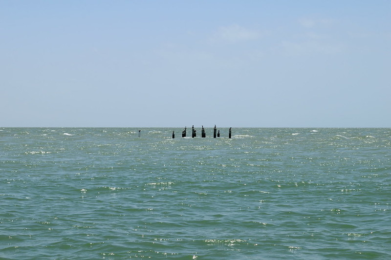 Piling of a former house Cape Romano, now bird posts - Ten Thousand Island Reserve - Dolphin, Birding and Shelling Tour