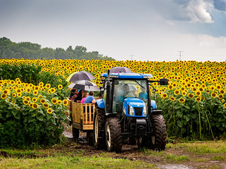 Riding in the rain through the sunflower fields | by Ed Rosack
