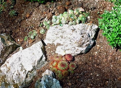 rénovation d'une rocaille 36062205730_6d1dd11c2c