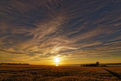 cirrus clouds sunset sunlight humberestuary humberside northlincolnshire wheatfield farmland eos1dxmk2 canon tamron 1530 wideangle golden hour