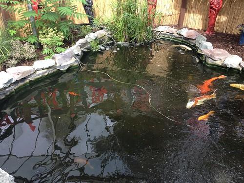 Medium koi pond maintenance