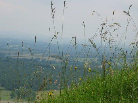 36 viewthroughgrass