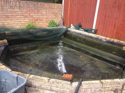 Pond clean Fareham