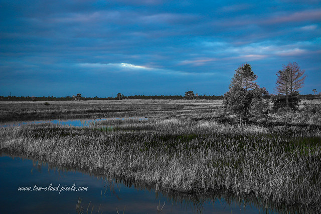 Blue Sky Over the Marsh