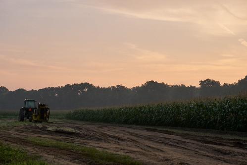 ct conecticut corn dirty landscape newengland america cornflakes farm heartland morning sky sunrise tractor farmington connecticut unitedstates us