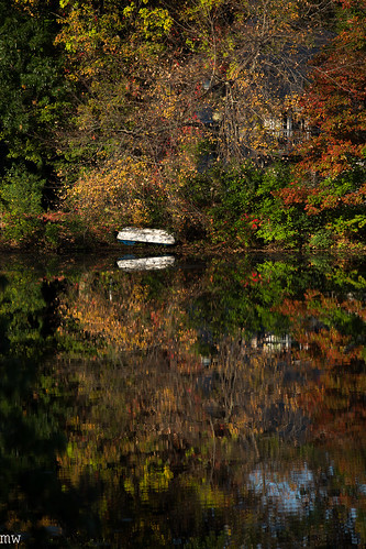 freemanlake northchelmsford chelmsford foliage leaves color canoe 6d 70200mm