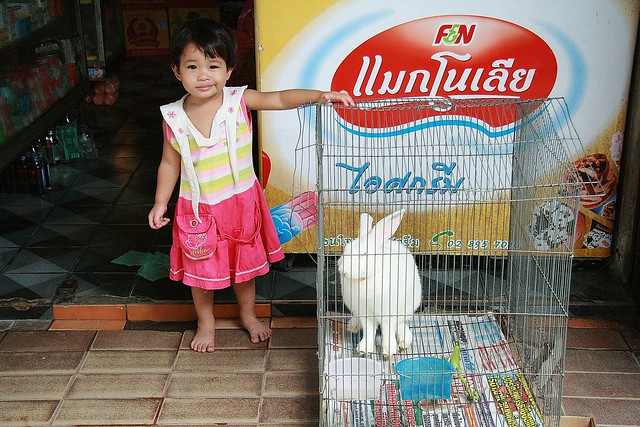 cute girl with rabbit