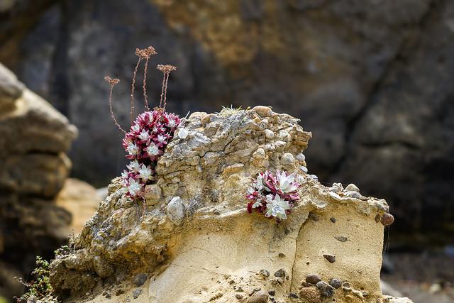 seashore - Morro Bay, CA  4-18-11  01