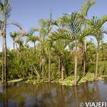 Viajefilos en la Amazonia, Peru 150
