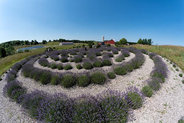 _DSC3569 Labyrinth