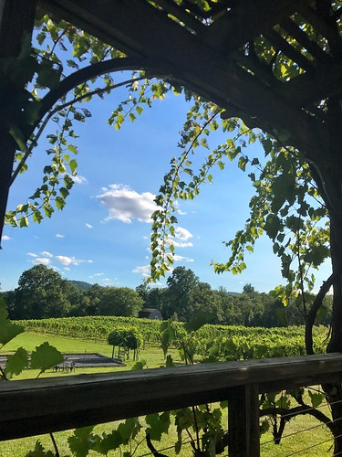 gadinowinery grapevines hills vineyard barn country
