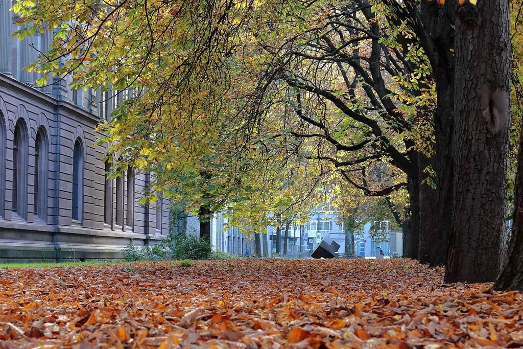 Herbst im Unipark