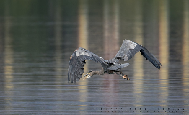 Heron exiting the scene