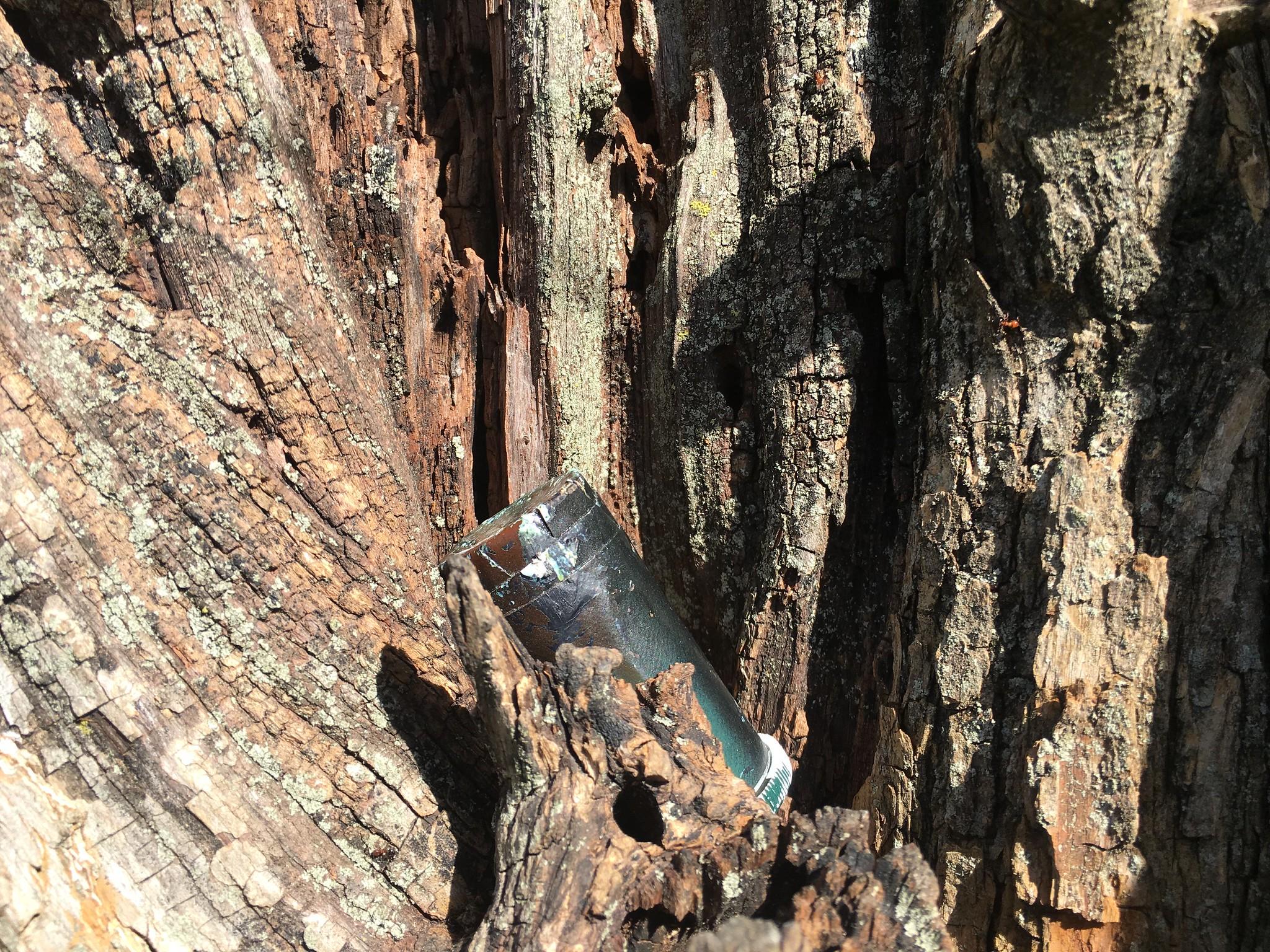 Geocache in a tree