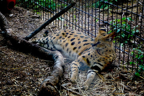 Denver_Zoo_20170617_0037 | by O En