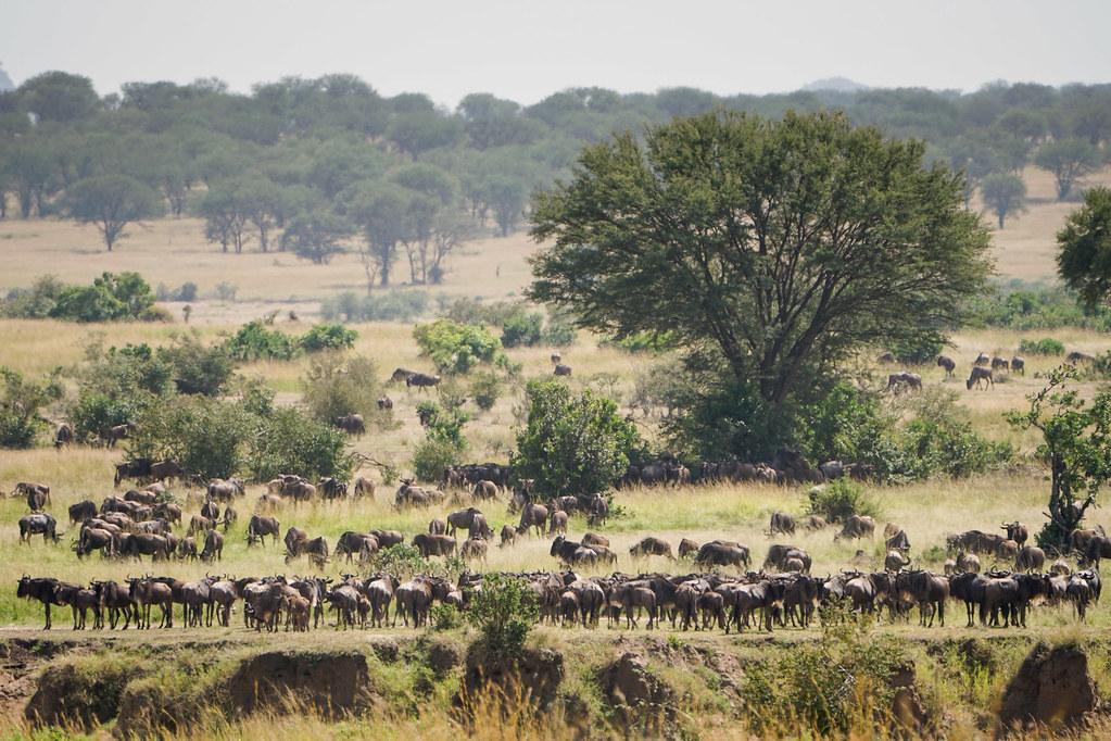Africa Part 2 -047