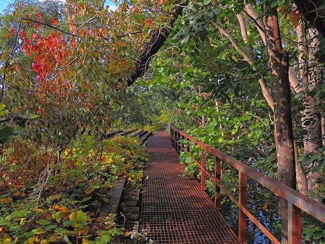 Wooded Walkway