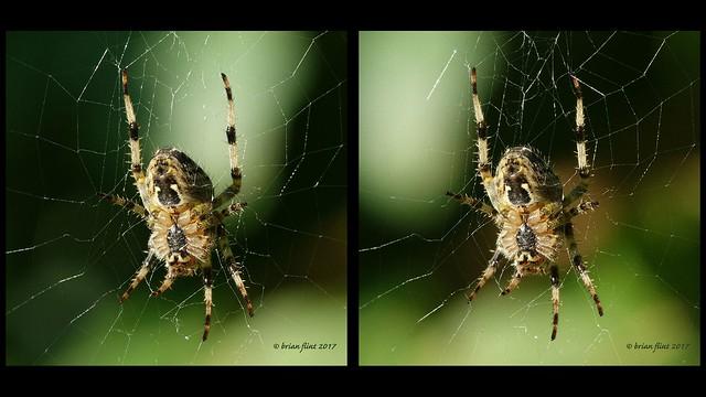 spider - 3d cross-view