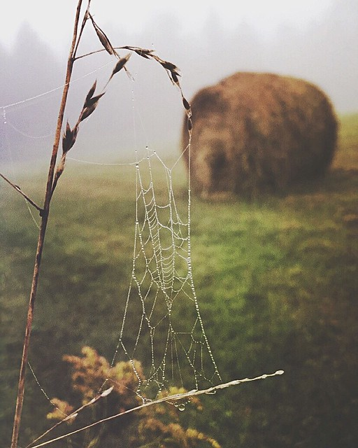 .fog, farms, dew drops on spider webs and you ..... my morning was complete