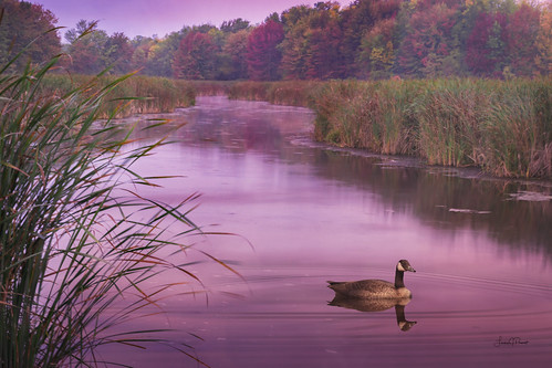 autumn sunrise lake pond creek grass goose wildlife trees light beautiful swamp morning travel early color