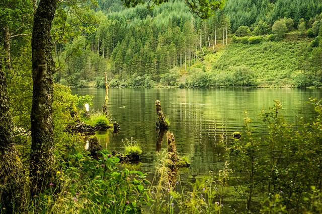Solitude Loch Eck