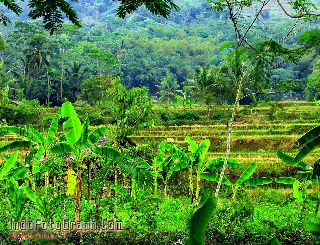 Photo Pemandangan Alam Wallpaper