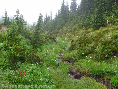 Meadows along the Timberline Trail, Mount Hood National Forest, Oregon
