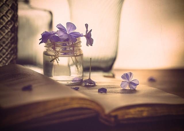 Of books and jasmines...