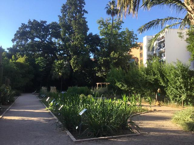 jardi botanic 3