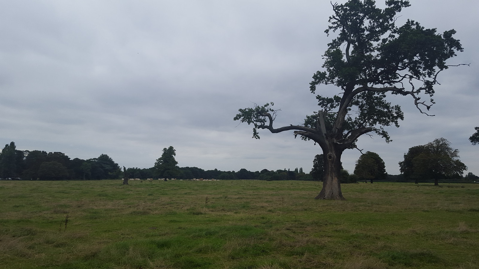 Boston Manor to Osterley